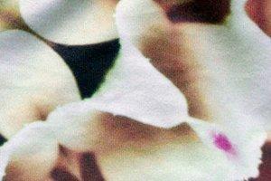 KimonoPeachskin fabric